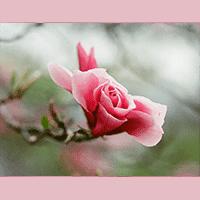 Pink Bud Nursing Center – Client Spotlight